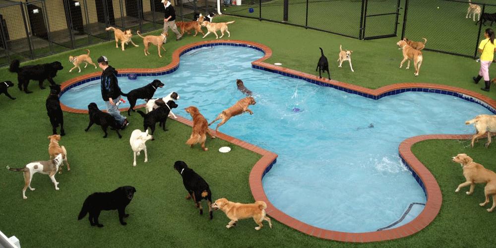 Piscina Per Cani Welldone